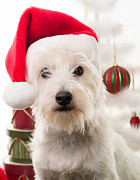 Santa Puppy Posters - Christmas Elf Dog Poster by Edward Fielding