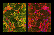 Leaflets Framed Prints - Christmas Fern Diptych Framed Print by Judi Bagwell