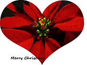 Christmas Greeting Framed Prints - Christmas Greetings Framed Print by Vijay Sharon Govender