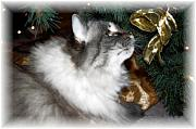 Christmas Greeting Photo Framed Prints - Christmas Kitty Framed Print by Debbi Granruth
