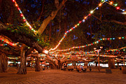Lahaina Prints - Christmas lights on the Lahaina Banyan tree Print by Nature  Photographer