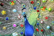 West Africa Digital Art - Christmas Peacock by Ronel Broderick