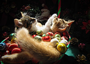 Kitteh Prints - Christmas Season w Two Kittens in Love - Kitty Cat Angels w Heads Up Nestled in a Basket of Baubles Print by Chantal PhotoPix