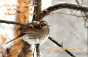 Sparrow Prints - Christmas Sparrow - Christmas Card Print by Lois Bryan