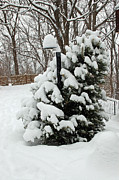 Snow Drifts Photos - Christmas Tree by Aimee L Maher