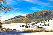 Susan Leggett Metal Prints - Christmas Tree Farm Metal Print by Susan Leggett