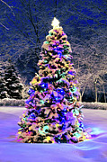 Lit Photos - Christmas tree in snow by Elena Elisseeva
