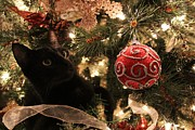 Catie Garza - Christmas Tree Kitty