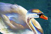 White Swan Photos - Chrome Swan by Robert Lacy