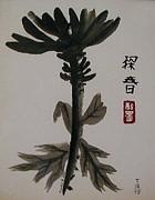 Sumie Prints - Chrysanthemum - Drunk With Ink Print by Terry  Stokely
