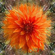 Flower Digital Art Originals - Chrysanthemum by Tom Romeo