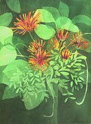 Anne Havard - Chrysanthemums