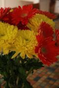 Jonathan Kotinek - Chrysanthemums in a Vase