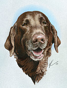 Chocolate Lab Drawings - Chubbs by Marshall Robinson