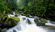 Moss Green Framed Prints - Chuckanut Creek Flow Framed Print by Mike Reid