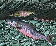 Salmon Paintings - Chum Salmon by Ralph Martens