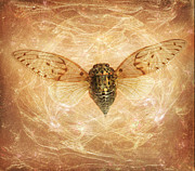 Janeen Wassink Posters - Cicada in Amber Poster by Janeen Wassink Searles