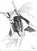 Bugs Drawings Prints - Cicada Print by Ramiliano Guerra