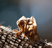 Cicada Photos - Cicada Shell  by Wilma  Birdwell