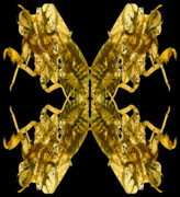 Cicada Posters - Cicada Shells Poster by Mark Wagoner