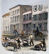 1860 Framed Prints - Cincinnati Hog Herding Framed Print by Granger