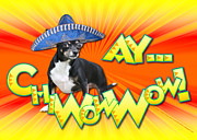 Canine Digital Art - Cinco de Mayo - Ay ChiWowWow by Renae Frankz