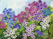 Brilliant Paintings - Cinerarias by Val Stokes