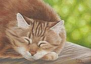 Cute Kitten Originals - Cinnamon is Introspective by Karen Coombes