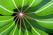 Leaf Detail Framed Prints - Circle Of Leaves Framed Print by Dan Holm
