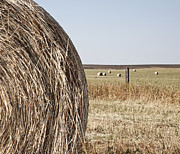 Bale Metal Prints - Circular Hay Bale Metal Print by Jetta Productions, Inc