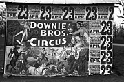 Showgirl Photo Prints - Circus Advertisement, 1936 Print by Granger