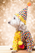 Circus Clown Posters - Circus Clown Dog Poster by Edward Fielding