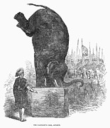 Circus Elephant Posters - Circus Elephant, 1853 Poster by Granger