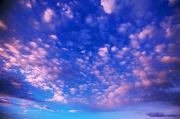 Selection Posters - Cirrus Clouds Poster by Natural Selection Craig Tuttle