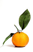 Tangerine Posters - Citrus with Leaves Poster by Marius Sipa