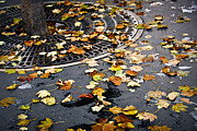 Asphalt Photos - City fall by Elena Elisseeva
