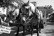 Horse And Cart Photos - City Life by Betsy A Cutler East Coast Barrier Islands