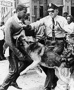 Police Dog Prints - Civil Rights, 1963 Print by Granger