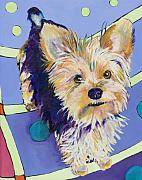 Yorkie Metal Prints - Claire Metal Print by Pat Saunders-White
