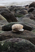 Krista Pandiscio - Clam On Rock