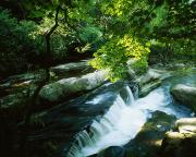 Beautiful Creek Prints - Clare Glens, Co Clare, Ireland Print by The Irish Image Collection