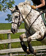 Dressage Photos - Clean Round by East Coast Barrier Islands Betsy A Cutler