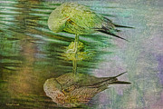 Water Reflections Mixed Media Framed Prints - Cleaning My Feathers Textured Framed Print by Deborah Benoit