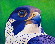 Peregrine Falcon Prints - Clear Light Print by Brian  Commerford