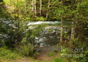 Mountain Stream Prints - Clear Mountain Stream Print by Carol Groenen