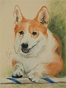 Corgi Drawings - Clear Run by Cori Solomon