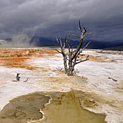 Western Usa Posters - Clearing Storm At Mammoth Hot Springs Poster by Photo by Mark Willocks