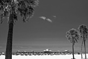 Florida Trees Posters - Clearwater Beach BW Poster by Adam Romanowicz