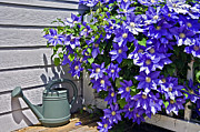 Susan Leggett Prints - Clematis and Watering Can Print by Susan Leggett