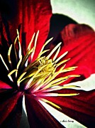 Climber Framed Prints - Clematis Detail in Color  Framed Print by Chris Berry